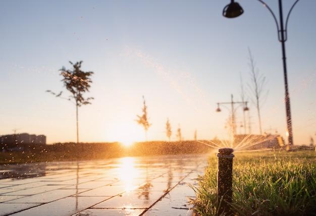 Bewässerungsgras der sprinkleranlage im park bei sonnenuntergang.