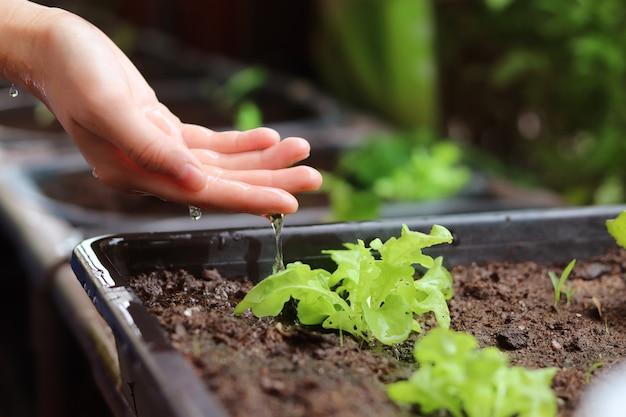 Bewässerungsgren-schätzchenanlage mit der hand