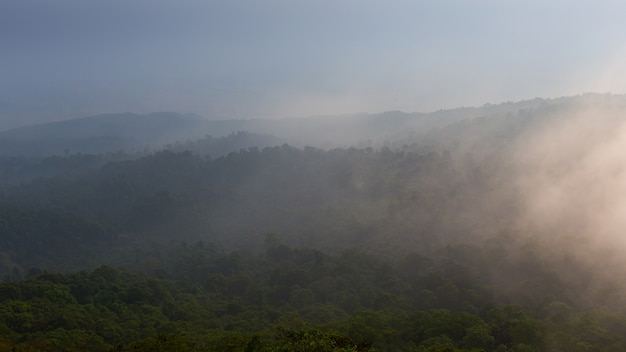 Bewaldeter berghang in tiefliegender wolke mit dem immergrünen baum im nebel