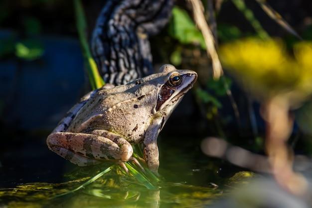 Beweglicher frosch im gartenteich
