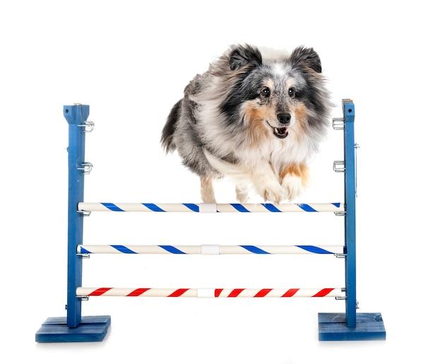 Beweglichkeit und kleiner hund