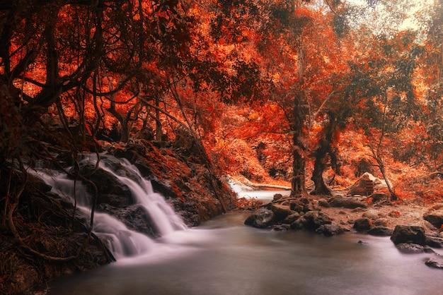 Bewegungswasserfall am regenwald im herbst