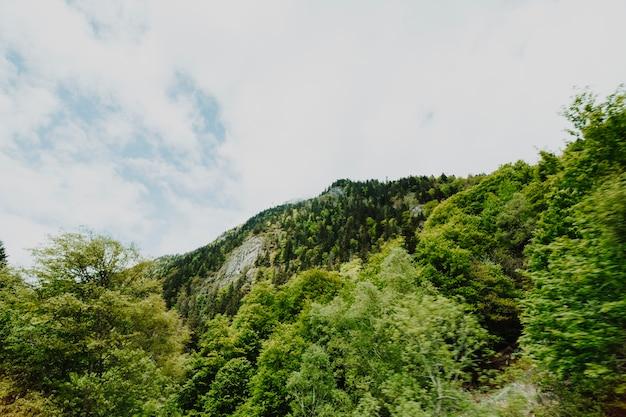 Bewölkte felsige landschaft mit vegetation