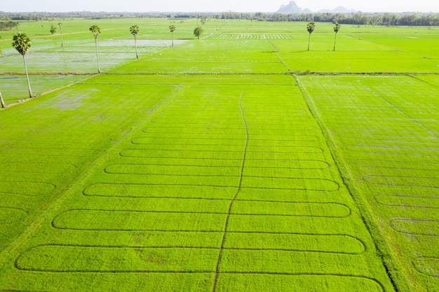 Bewölkte landschaft der grünen graswolke des grünen feldes des reisfeldes