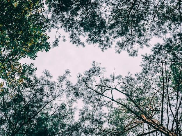 Bewölkter himmel im frühjahr über den alten bäumen