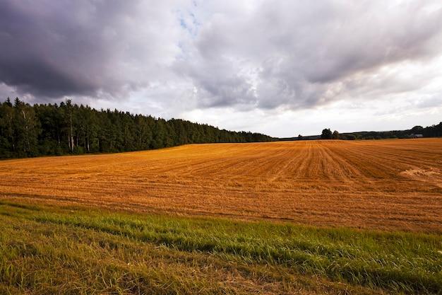 Bewölktes wetter - der sturmhimmel von dunkler farbe über einem landwirtschaftlichen feld