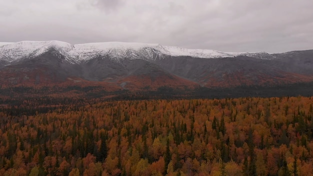 Bewölktes wetter vergilbte bäume schneebedeckter berggipfel