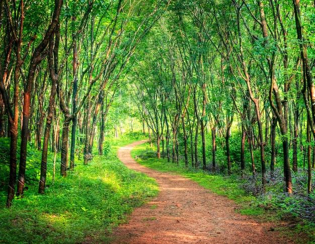 Bezaubernde waldweg in einer gummibaumplantage, kerela, indien.