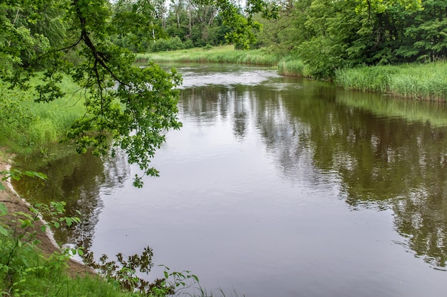 Biegung des ogerflusses. küste mit schilf bewachsen. äste von bäumen hängen über wasser. grüne natur des lettischen sommers.