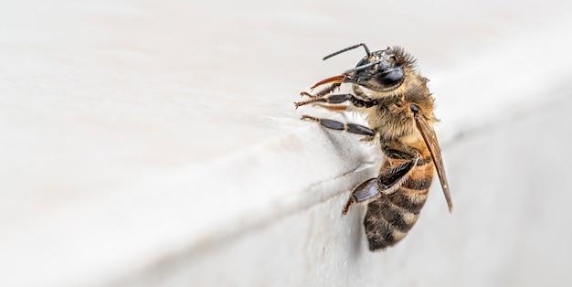 Biene auf einem hellen hintergrund mit platz für text.