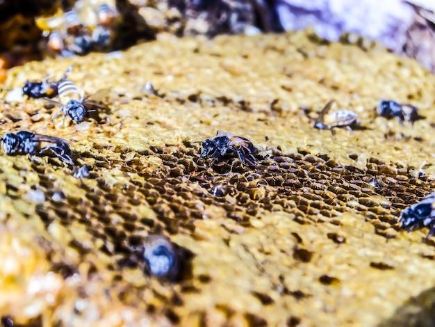 Biene in waben