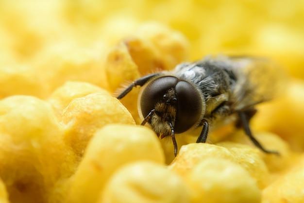 Biene kümmert sich um waben