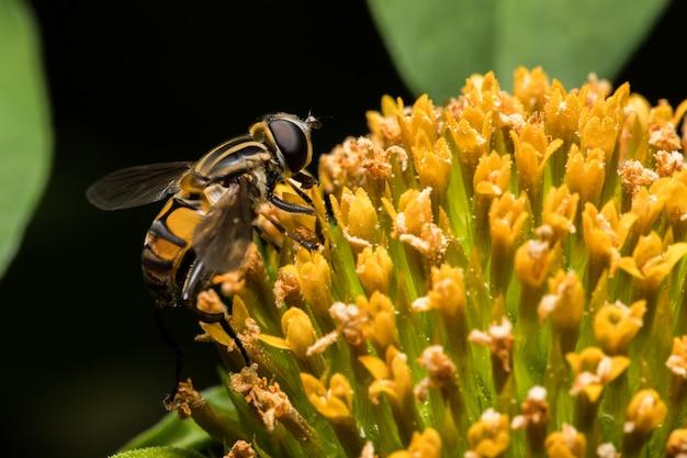 Biene mit orangen blüten