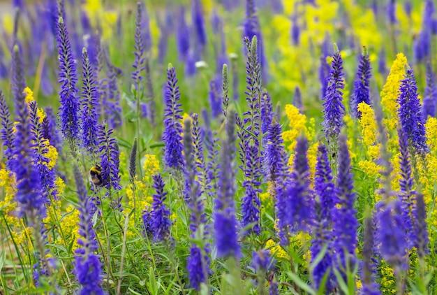 Biene sitzt auf lavendelblume