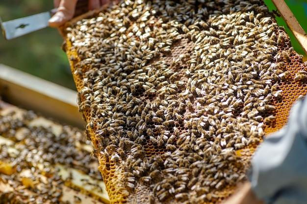 Bienen auf der wabe, draufsicht. bienenstock mit honigbienen, rahmen des bienenstocks, draufsicht.