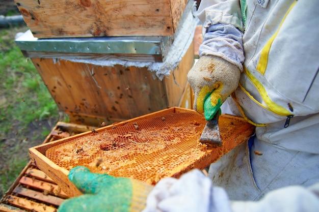 Bienen auf einem hölzernen bienenstock