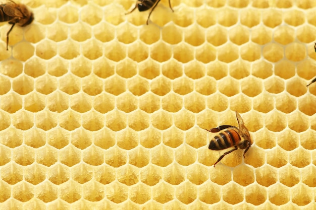 Bienen auf einer wabe