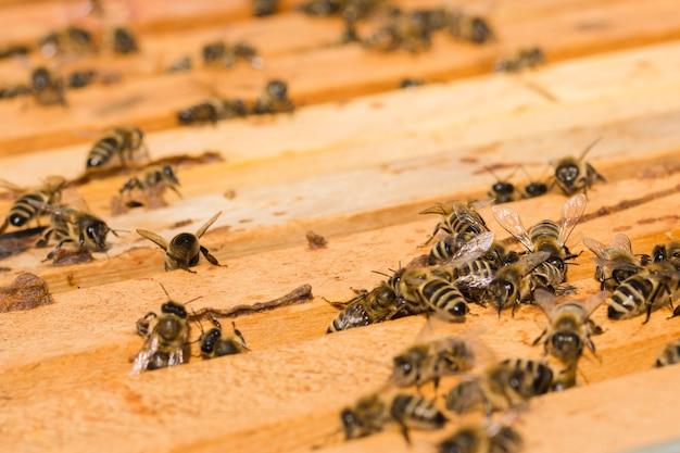 Bienen auf holz