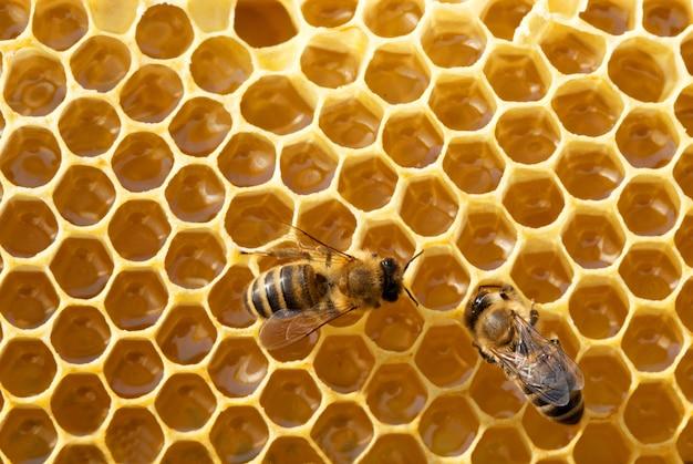 Bienen auf honigzellen