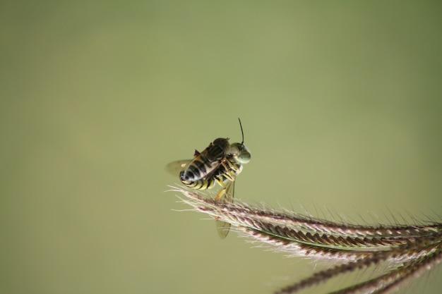 Bienen bekommen beute