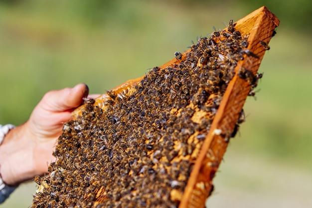 Bienen, die auf bienenwabe in der hand des mannes schwärmen
