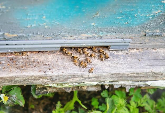 Bienen, die im sommer auf anhaltspunkt sitzen.