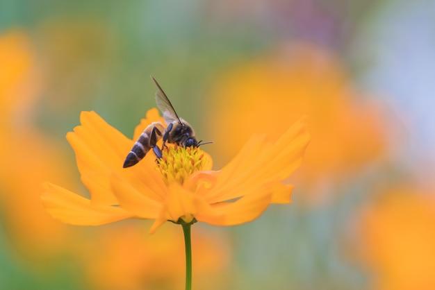 Bienen fangen an den schönen blumen
