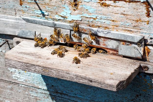 Bienen fliegen in einen bienenstock. frühling oder sommer im bienenhaus