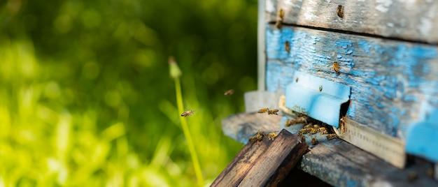 Bienen fliegen um bienenstock herum. honigbienen schwärmen und fliegen um ihren bienenstock. imkerei-konzept. selektiver fokus