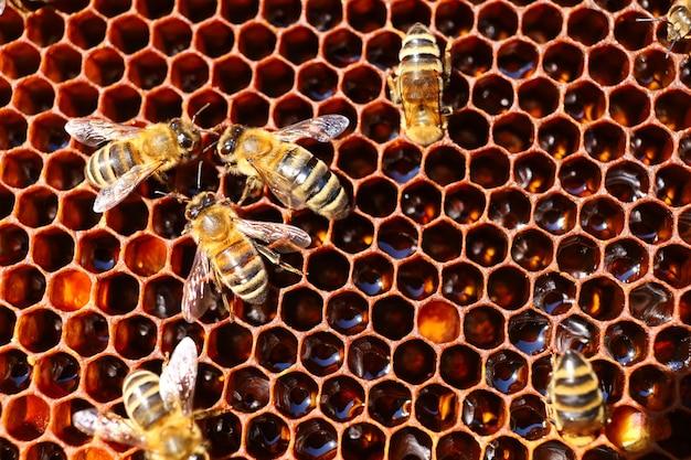 Bienen im bienenstock im bienenhaus und in der waben-nahaufnahme