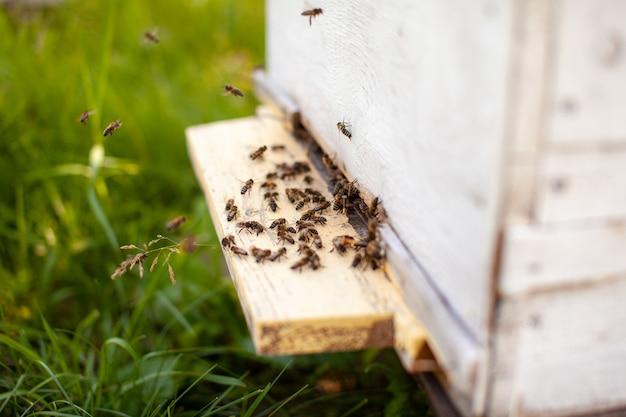 Bienen sammeln pollen von den blüten und tragen ihn zum bienenstock. das konzept der bienenzucht für honig, imkerei