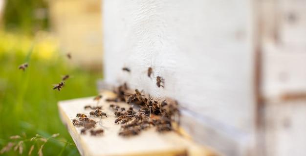 Bienen sammeln pollen von den blüten und tragen ihn zum bienenstock
