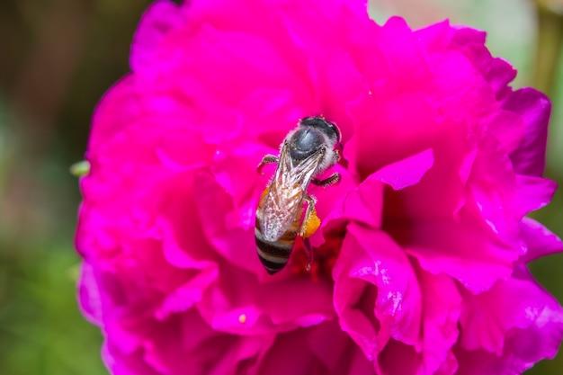 Bienen- und honigbestäubung