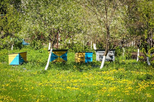 Bienenfarm honigbienenhaus imkerei bienenstock wiese haus sommer naturproduktion