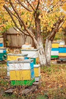 Bienenhaus mit hölzernen alten bienenstöcken im fall. bienen für den winter vorbereiten