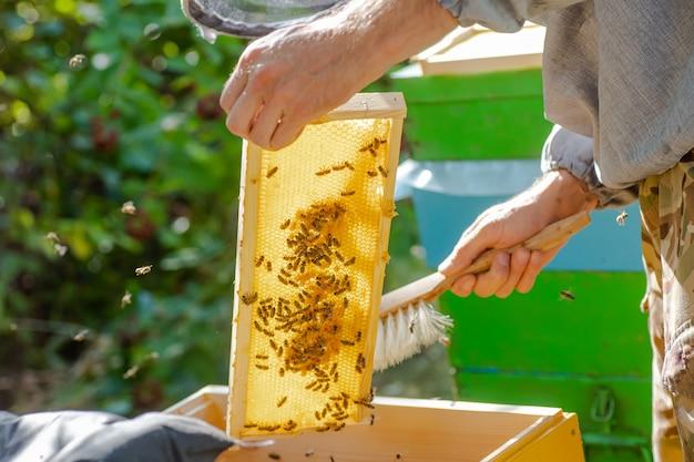 Bienenstock-frühlingsmanagement. imker inspiziert bienenstock und bereitet bienenhaus für die sommersaison vor. bienenzucht.