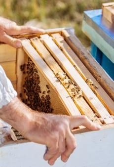 Bienenstock in der pflege von bienen mit waben und honigbienen. imker öffnete bienenstock, um einen leeren rahmen mit wachs für die honigernte aufzustellen.