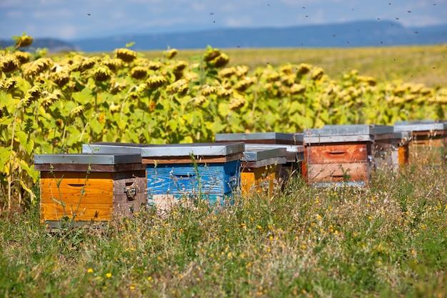 Bienenstöcke auf dem sonnenblumenfeld in der provence, frankreich. gefilterte aufnahme