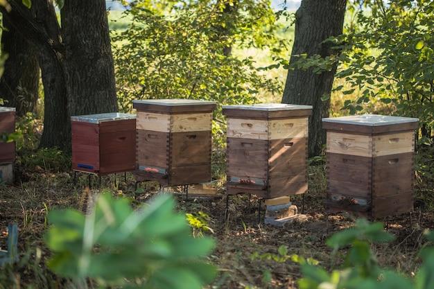 Bienenstöcke auf einer grünen wiese insektenbienen sammeln honig