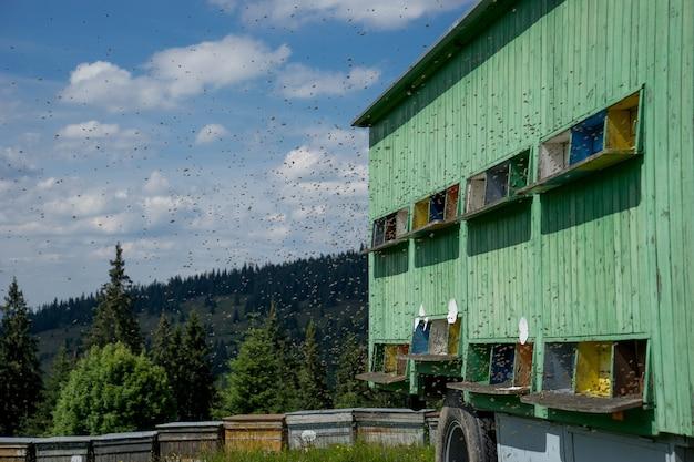 Bienenstöcke auf wiese in der landschaft mit himmel und wald auf hintergrund