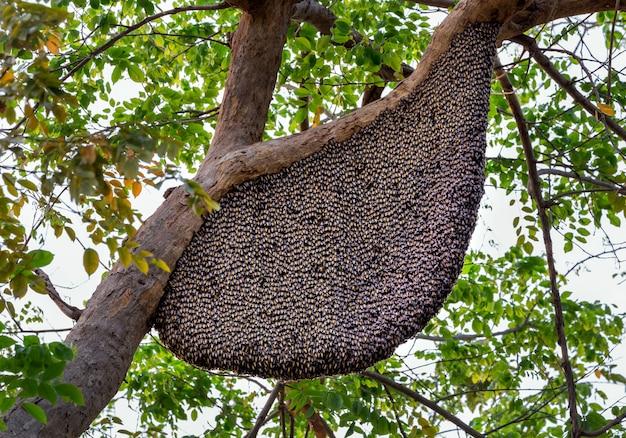 Bienenstöcke, die an einem baum im wald hängen.