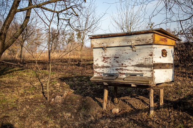 Bienenstöcke im garten unter den bäumen im vorfrühling unter primeln. gartenbäume ohne blätter. erster frühlingsflug von überwinternden bienen.