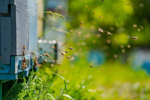 Bienenstöcke in einem bienenstand mit bienen, die zu den landebrettern fliegen. imkerei. bienenraucher im bienenstock.