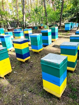 Bienenstöcke sind mehrfarbig, stehen im wald und sammeln honig von waldblumen.