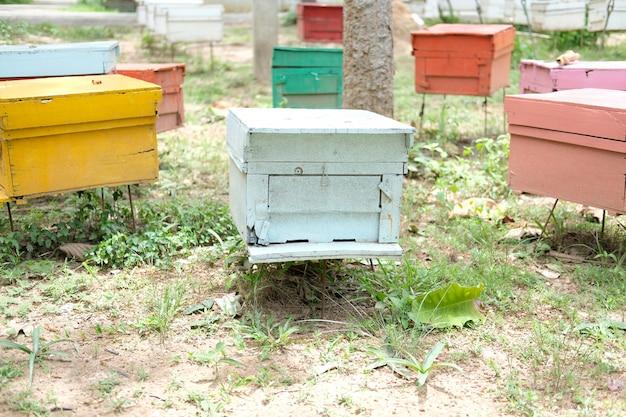 Bienenstöcke von honigbienen in der natur