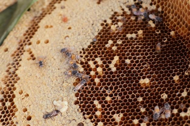 Bienenwabe am straßenlebensmittel