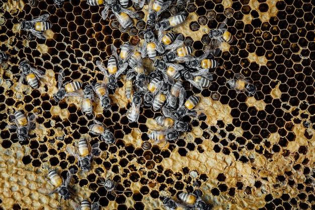 Bienenwabe mit bienenhintergrund