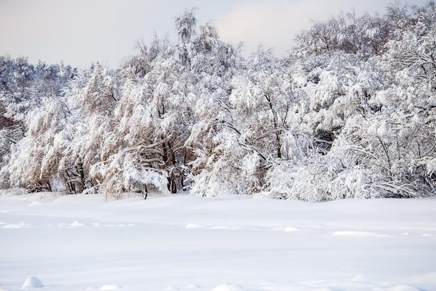 Bild der malerischen winterlandschaft mit blauem himmel am nachmittag