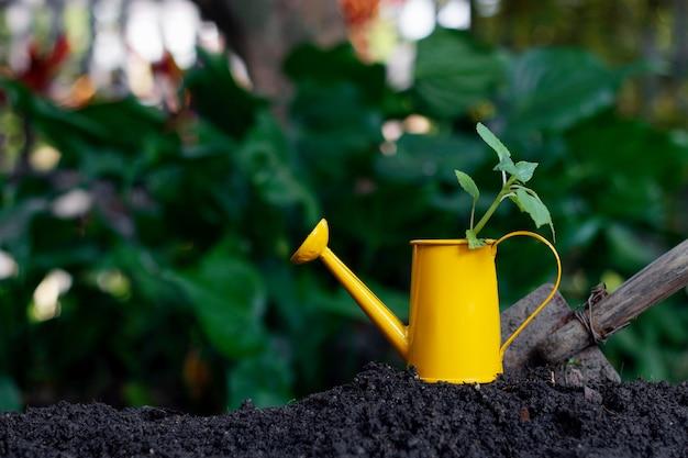 Bild der vorbereitung, bäume zu pflanzen