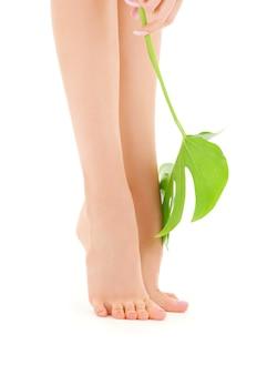 Bild der weiblichen beine mit grünem blatt über weiß